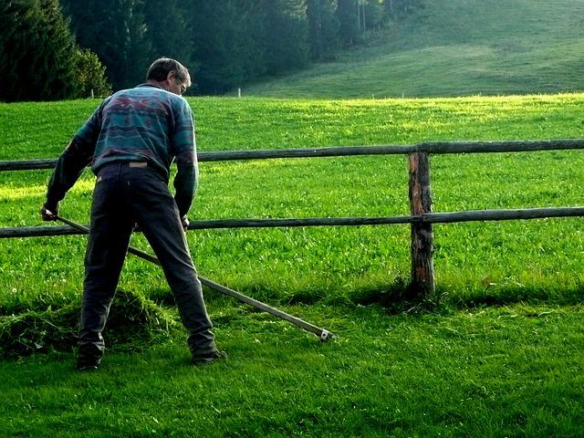 חרמשים לגינה - איך בוחרים חרמש איכותי?