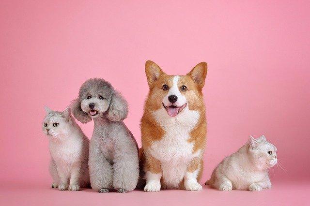 ציוד לכלבים וחתולים