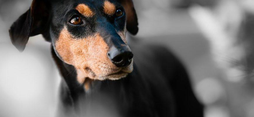 Pedigree מציגה – ליין מוצרים שכל כלב יוכל לאהוב