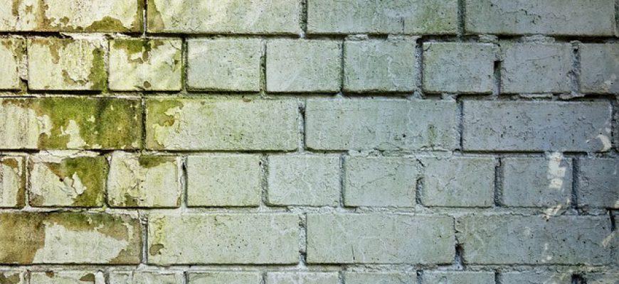 הסיכונים בעובש בקירות שצריך להיות מודעים אליהם