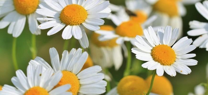 דרכים טבעיות לטיפול בקנדידה