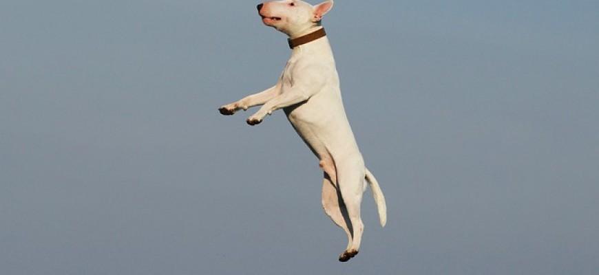 טיפים לאילוף כלבים עצמאי
