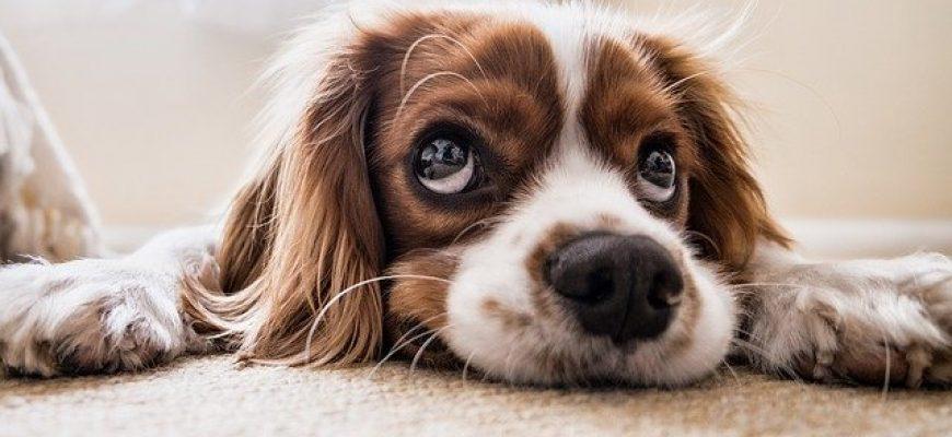 מה לעשות עם כלבים בזמן ההסגר