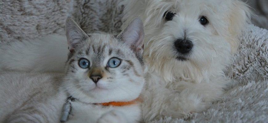 נטורל באלנס – מזון לכלב ולחתול