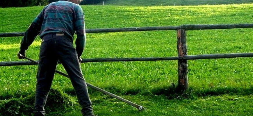 חרמשים לגינה – איך בוחרים חרמש איכותי?