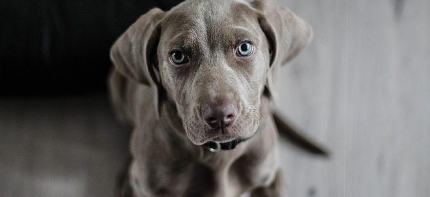 אוכל לכלבים – כיצד בוחרים את האוכל הנכון לכלב שלנו